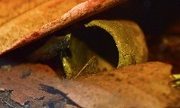 Deepin peat's Avatar