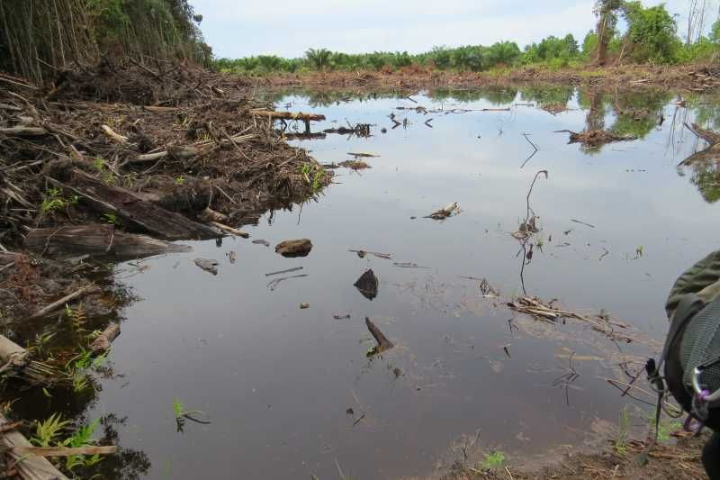 Destruction of paro habitat near Lundu Sarawak airport kent