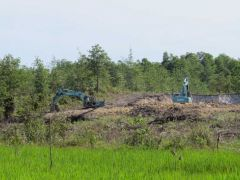 Destruction of paro habitat near Sibu Sarawak airport kent2